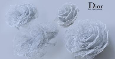 The Frosen Rose-Dior VR